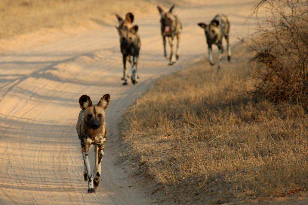 masai mara adventure