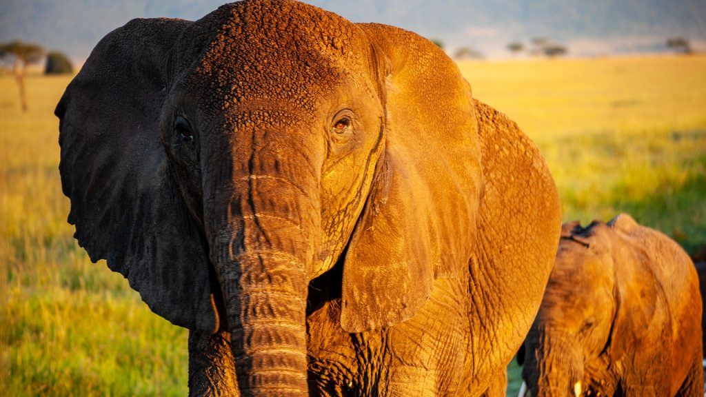 elephant-4120823_1920