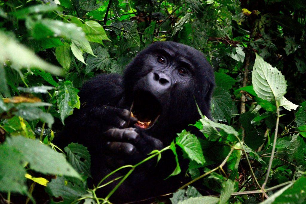 wildlifesafarisinafrica