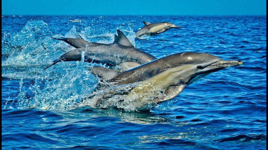 wasini island dolphins