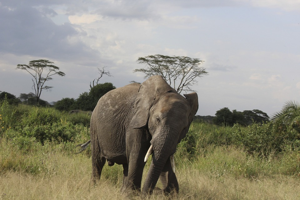 The best african safaris for second-timers