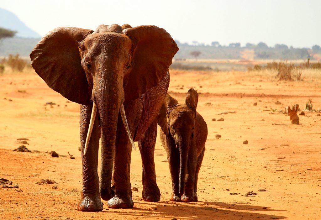 elephant-2241360