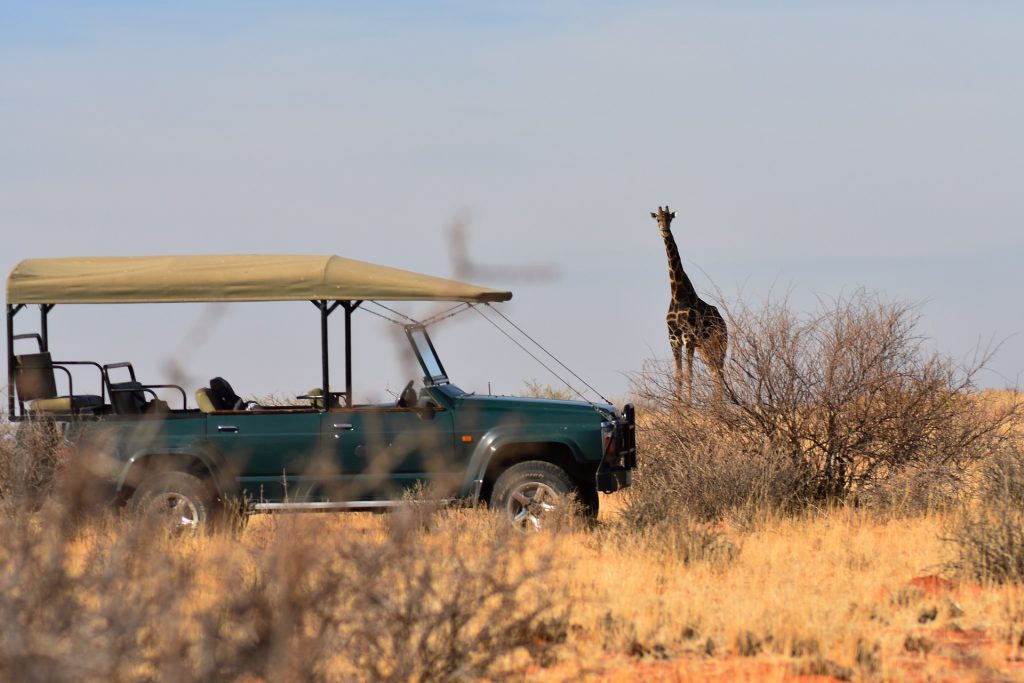 african safari travel specialist