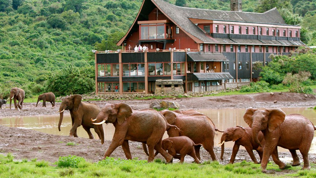 affordable african safari