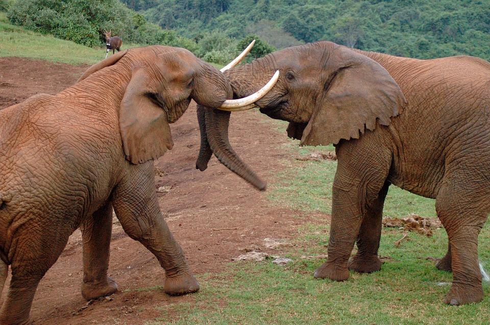 elephants-2053040_960_720