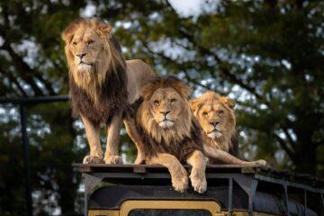 types of safaris