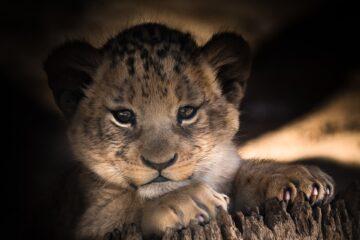 what is the best safari in kenya